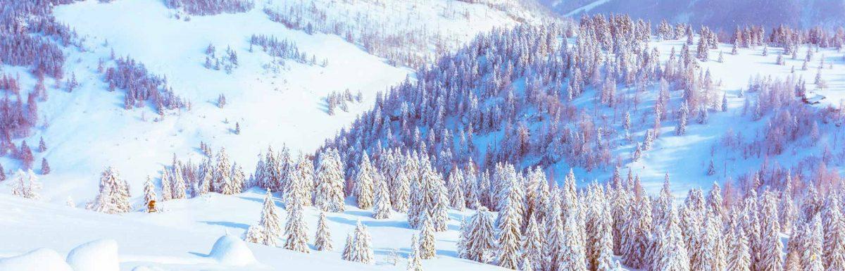 Winter woodland for Vancano's webcam overlay